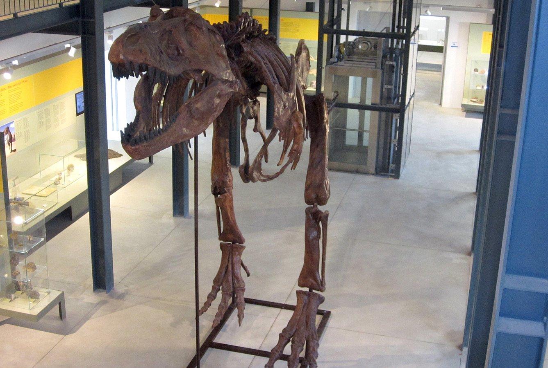 Museo PAS